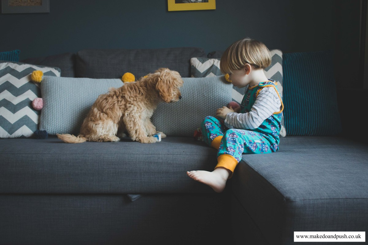Doggyhood // 7 reasons why puppies and toddlers are the same